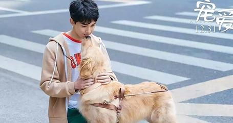 《宠爱》:宠物电影中的宠物与人